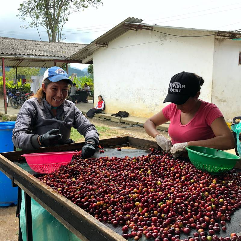 Colombia – La Cabana – Danilo Perez – Anaerobic Fermantation Coffee Direct Trade Espresso Fair2Farmer Fully Washed Washed